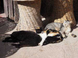 Chats qui dorment à Essaouira
