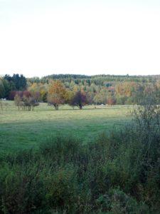 Un automne en Ardenne Belge