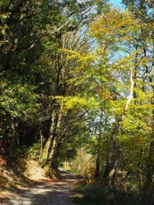 Ballade en Ardenne Belge