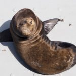 Visiter Carmel-by-the-sea, Monterey et Santa Cruz sur la côte centrale de Californie