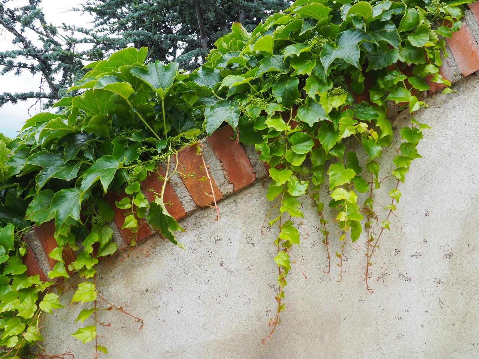 Les vignes de Mikulov en République Tchèque
