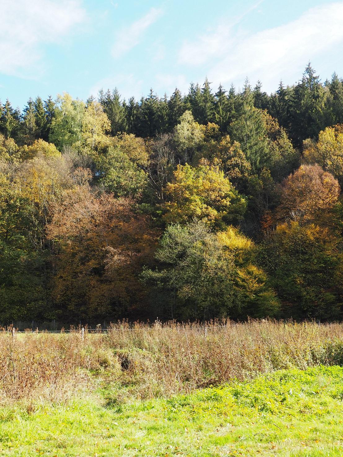 Randonnée en Province du Luxembourg