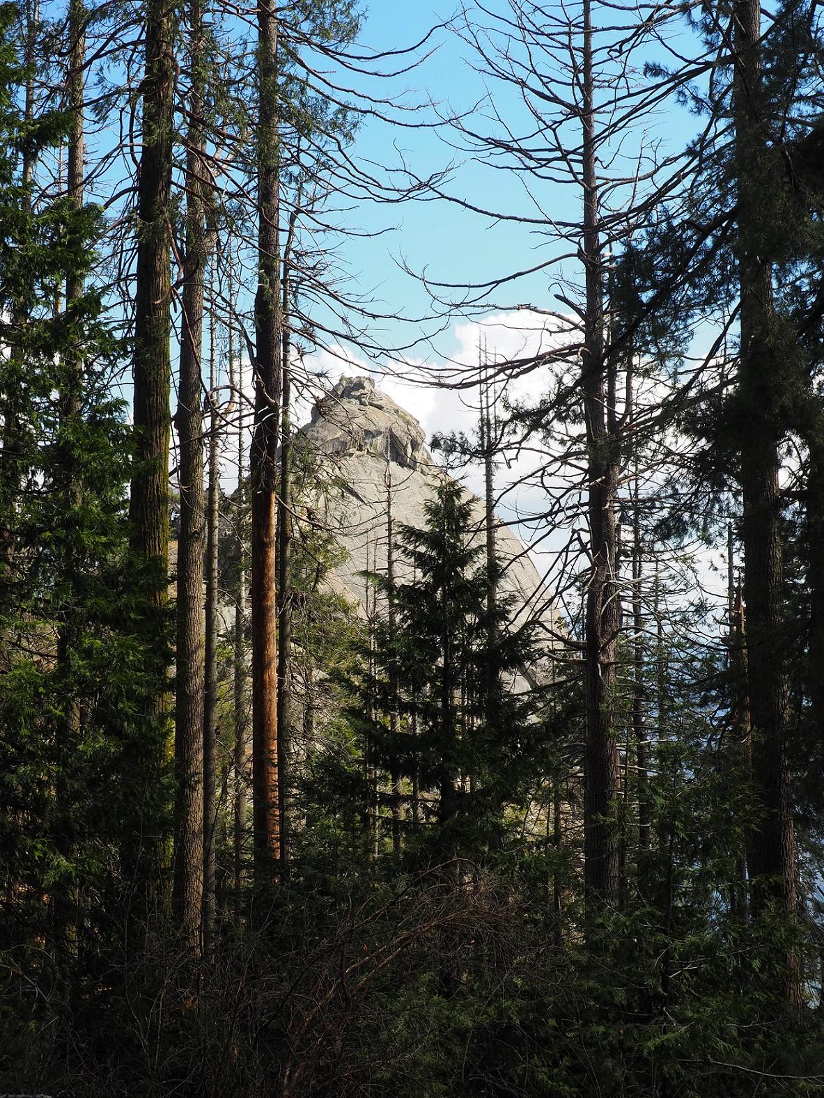 Sequoia Moro rock