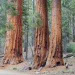 Sequoia et Kings Canyon National Parks en une journée