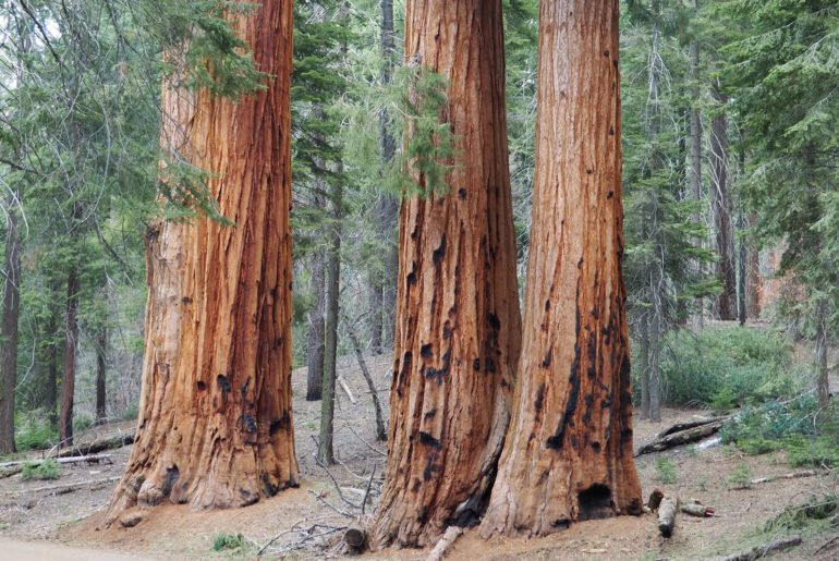 Sequoia et Kings Canyon National Parks en une journée