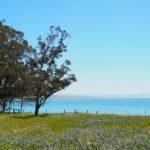 Cambria, San Simeon et Harmony en Californie
